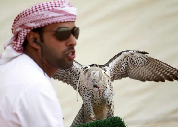 باشگاه خبرنگاران -تفریحات شیخ های عرب با پرندگان ایرانی/ میلیاردها تومان برای خرید فقط یک پرنده شکاری