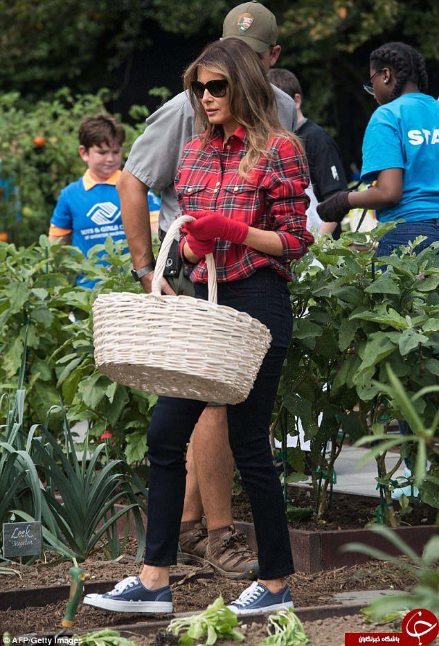 لباس گرانقیمت ملانیا ترامپ  هنگام باغبانی+تصاویر