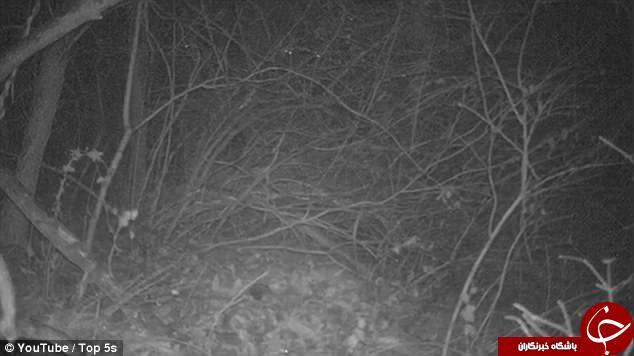 موجودی سه چشم در دل تاریکی جنگل+تصاویر////دپویی تاسوعا