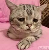 باشگاه خبرنگاران -افسردهترین گربه جهان، سوژه پرطرفدار فضای مجازی +تصاویر