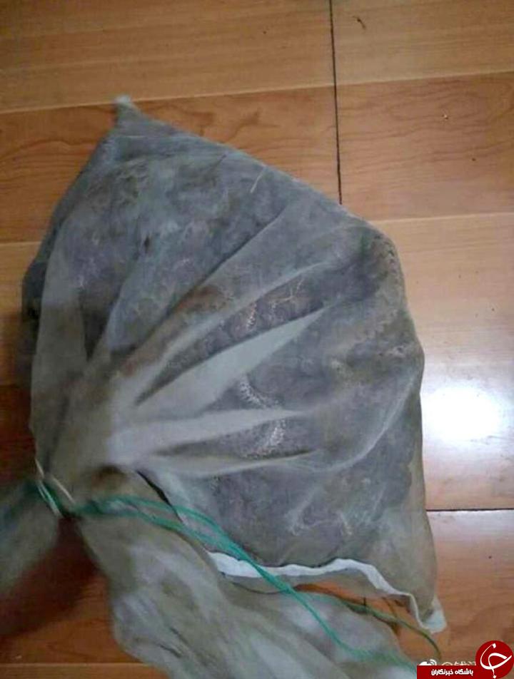 دستگیری مرد حامل 50 مار افعی با چمدان! تصاویر