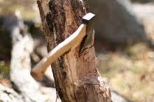 دستگیری عاملان تخریب جنگل در سیروان