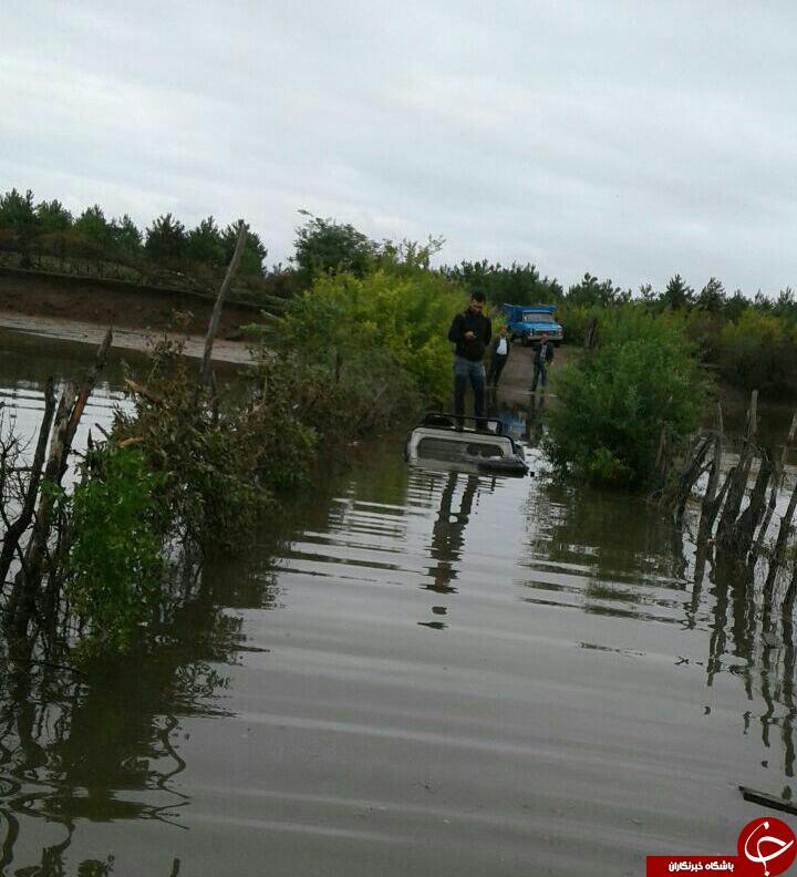 بارش باران و خسارت دیدن درختان کیوی در پشته جوکندان + تصاویر