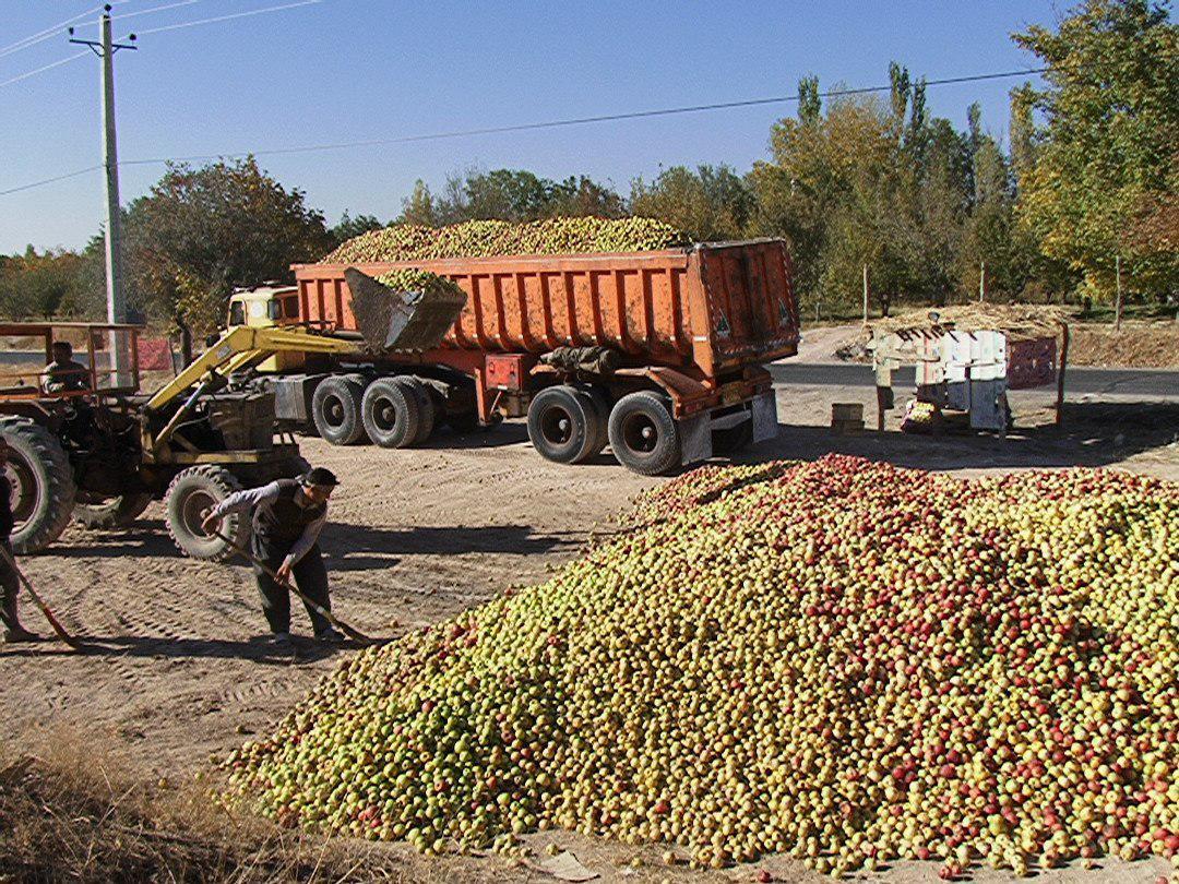آغاز خرید توافقی سیب درجه ۳ توسط تعاون روستایی