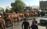 باشگاه خبرنگاران -کاروان قافله حسین (ع) به اراک رسید + عکس