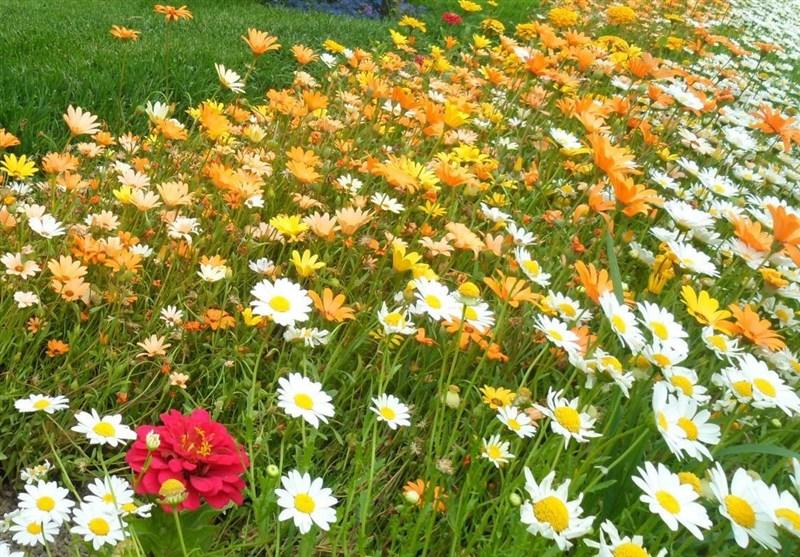 تبدیل زمین بیمحصول به منبع تولید گیاهان دارویی + فیلم