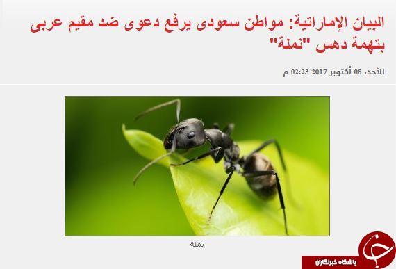 دادخواهی عجیب شهرونده سعودی به دادگاه عربستان در پی له شدن یک مورچه!