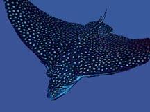 نبود اعتبارات لازم پایش گونه های دریایی را با مشکل رو به رو کرده است