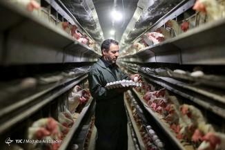 بمناسبت روز جهانی صنعت تخم مرغ