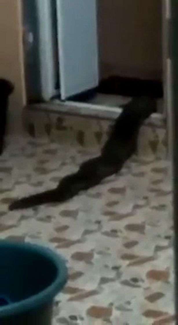 هیولایی عجیب در سرویس بهداشتی صاحبخانه را شوکه کرد+ فیلم