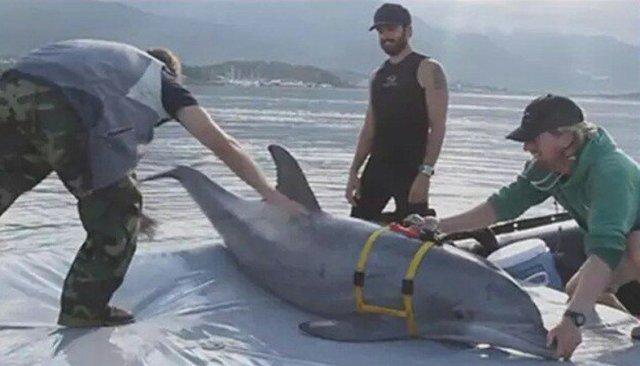 وقتی صهیونیستها برای جنگ و جاسوسی دست به دامان «دلفینها» میشوند!