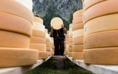 باشگاه خبرنگاران -تصاویر روز: از کشتن تمساح ۵.۲ متری به ضرب گلوله تا آماده شدن پنیرهای سوئیسی پس از یک دوره سه ماهه