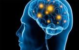 باشگاه خبرنگاران -راه اندازی آزمایشگاه ملی نقشهبرداری مغز توسط وزارت بهداشت و علوم