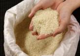 باشگاه خبرنگاران -همدستی متخلفان برای اختلاط برنج مرغوب ایرانی با نامرغوبهای خارجی + فیلم