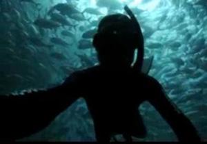 غواصی دیدنی در میان ماهیها +فیلم