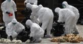 باشگاه خبرنگاران -کشور برای مقابله با آنفولانزای مرغی آمادگی دارد؟/تحمیل خسارات میلیاردی سال های گذشته فراموش نشود
