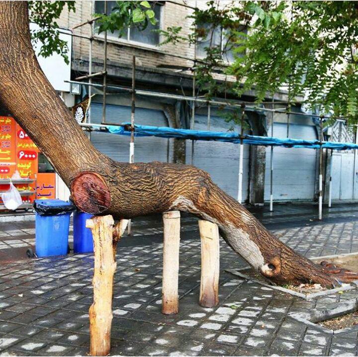 درختی جالب در میدان گمرک تهران + عکس