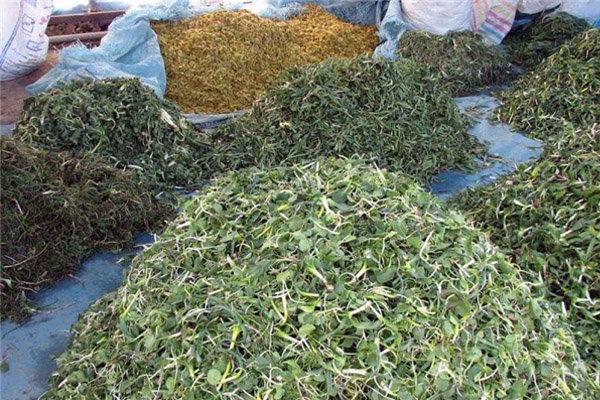 گیاهان داروئی بردسیر به بازار می آید