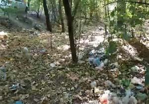 چهره ناخوشایند زباله در جنگل های گلستان + فیلم