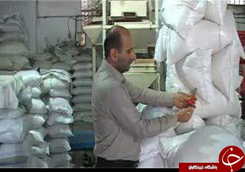 کابوس برنجهای وارداتی خواب هر ساله شالیکاران/ واردات برنج هرسال بیشتراز پارسال