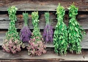 تولید ۲ هزار و ۲۰۰ تن انواع گیاهان دارویی در استان سمنان