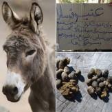 باشگاه خبرنگاران -عنبر نسارا، پرخاصیتترین مدفوع جهان +تصاویر