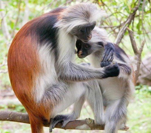 زیباترین حیوانات طبیعت+عکس