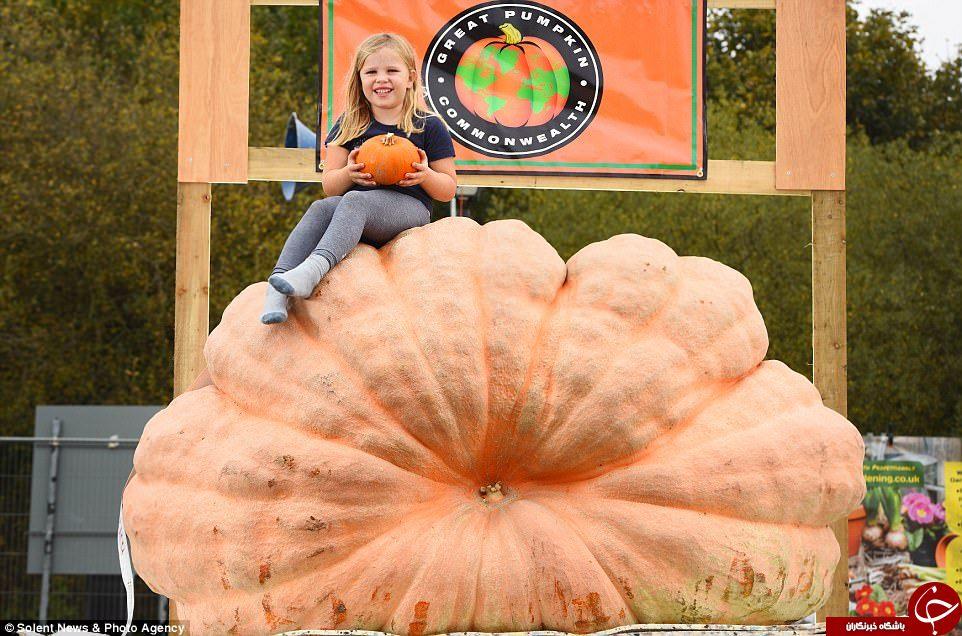 پرورش بزرگترین کدوتنبل با وزن بیش از ۱۰۰۰ کیلوگرم در انگلیس+ تصاویر