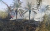 باشگاه خبرنگاران -آتش سوزی در نخلستان های چوئبده