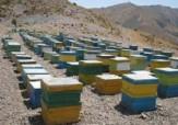 باشگاه خبرنگاران - آغاز سرشماری کلنیهای زنبور عسل در کردستان