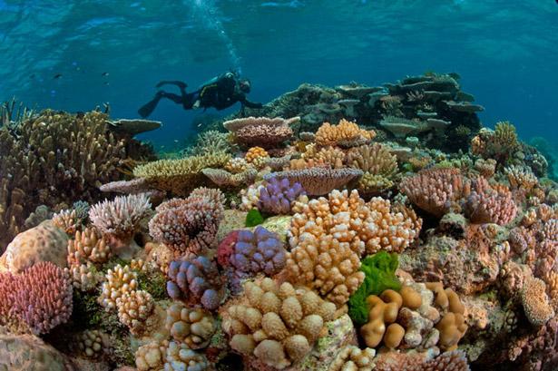 گزارش ////////مرجان های خلیج فارس رو به نابودی رفته اند/  جزیره نایبند با ۴۲ درصد بالاترین میزان تخریب مرجانها را در جنوب کشور دارد/مرگ 90 درصد مرجان های خلیج فارس