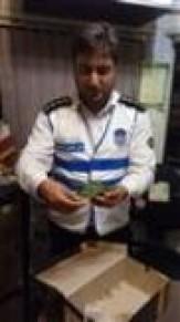 باشگاه خبرنگاران -تحویل پرنده مجروح به محیط زیست آستانه اشرفیه