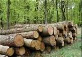 باشگاه خبرنگاران -کشف یک محموله چوب قاچاق در شهرستان مرزی آستارا
