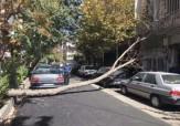 باشگاه خبرنگاران -سقوط درخت در خیابان چهلستول + عکس