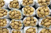 باشگاه خبرنگاران -سه هزار و ۶۰۰ تن سیب زمینی صادر میشود