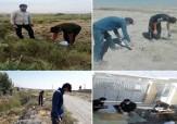 باشگاه خبرنگاران -اجرای طرح جونده کشی برای مبارزه با بیماری سالک در زرقان