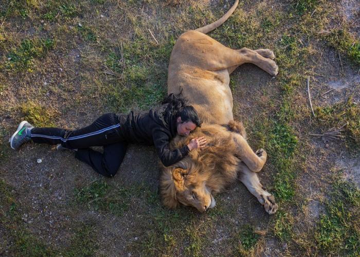 صحنه باور نکردنی از خوابیدن یک جوان در کنار شیر