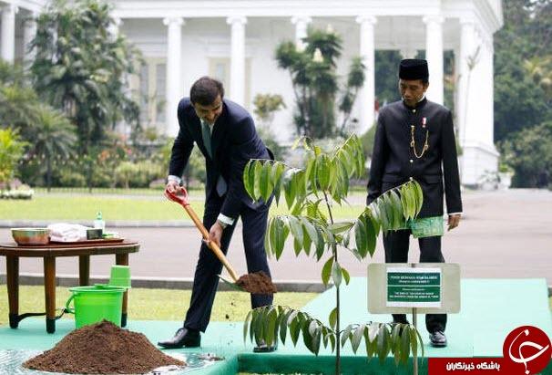 درختکاری امیر قطر در اندونزی+عکس