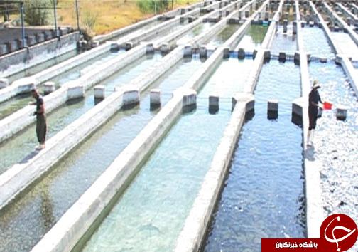 رتبه نخست تولید ماهی پرورشی لرستان در بین استانهای غیر ساحلی / پرورش ماهی آزاد برای اولین بار در لرستان + تصاویر