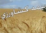 باشگاه خبرنگاران -آغاز بیمه محصولات کشاورزی خوزستان در سال زراعی جدید