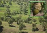 باشگاه خبرنگاران -اجرای کمربند حفاظتی جلوگیری از تخریب اراضی جنگلی