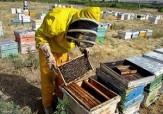 باشگاه خبرنگاران -تولید سالیانه 209 تن عسل در سنندج