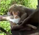 باشگاه خبرنگاران -دوستی میمون و گربه! + فیلم