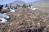 باشگاه خبرنگاران -آغاز کشت پاییزه غلات در مزارع شاهینشهر و میمه