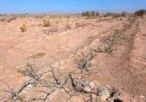 باشگاه خبرنگاران -قابل کشت نبودن مراتع فارس به دلیل خشکسالی