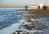 باشگاه خبرنگاران -مرگ جانوران دریایی در ساحل بندرعباس + فیلم