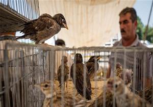 باشگاه خبرنگاران -برخورد با 97 مورد تخلف زیست محیطی در شش ماهه اول سال/ ابلاغ اخطار قانونی به بازار پرندگان خلیج فارس 2
