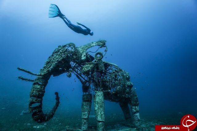 غواصی در کنار یک فیل مرجانی+عکس