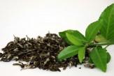 خرید تضمینی برگ سبز چای به ۱۰۵ هزارتن رسید/ پرداخت ۷۰ درصد از مطالبات چایکاران