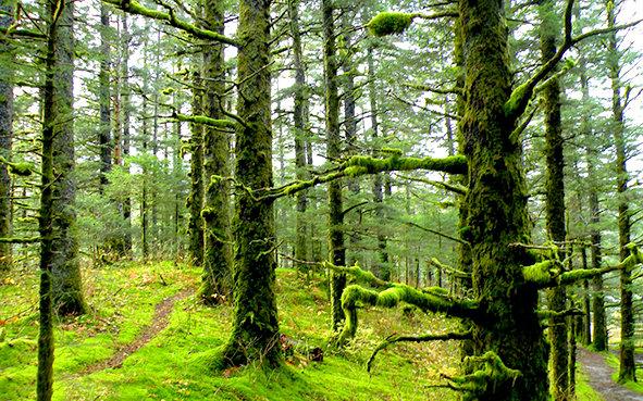 باشگاه خبرنگاران -ایران شانزدهمین کشور جهان در حفاظت از جنگل ها/۱۳۷ هزار هکتار سطح جنگلهای شمال افزایش یافت